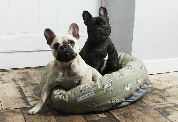 Mutts_And_Hounds_Green_Bed_French_Bulldog.jpg