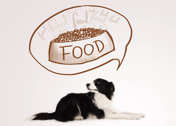 Right-food-for-your-dog.jpg