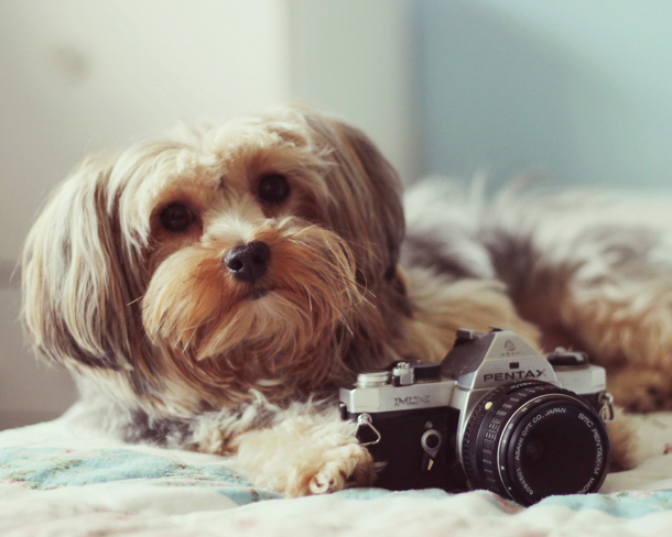 dog-with-camera-wallpaper.jpg