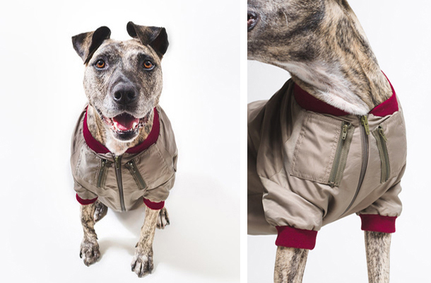 Happy-Staffy-Me-Bomber-coat.jpg