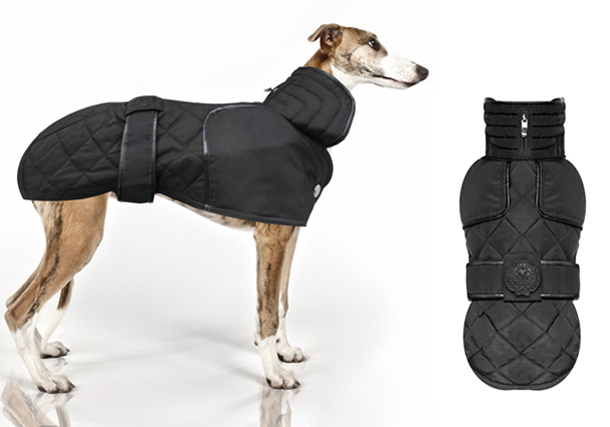 MP-Whippet-Coat.jpg
