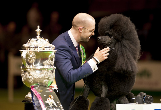 Crufts-2014-winner.jpg