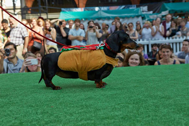 Sausage_Dog_Paw_Pageant.jpg