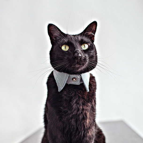 RoverBoutique_KittyCollar.jpg